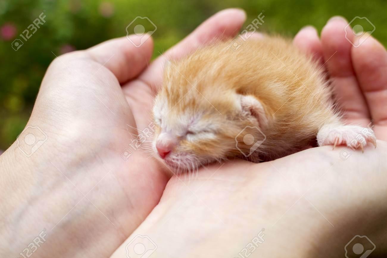 Новорожденный и домашние животные. питомец в семье с ребенком