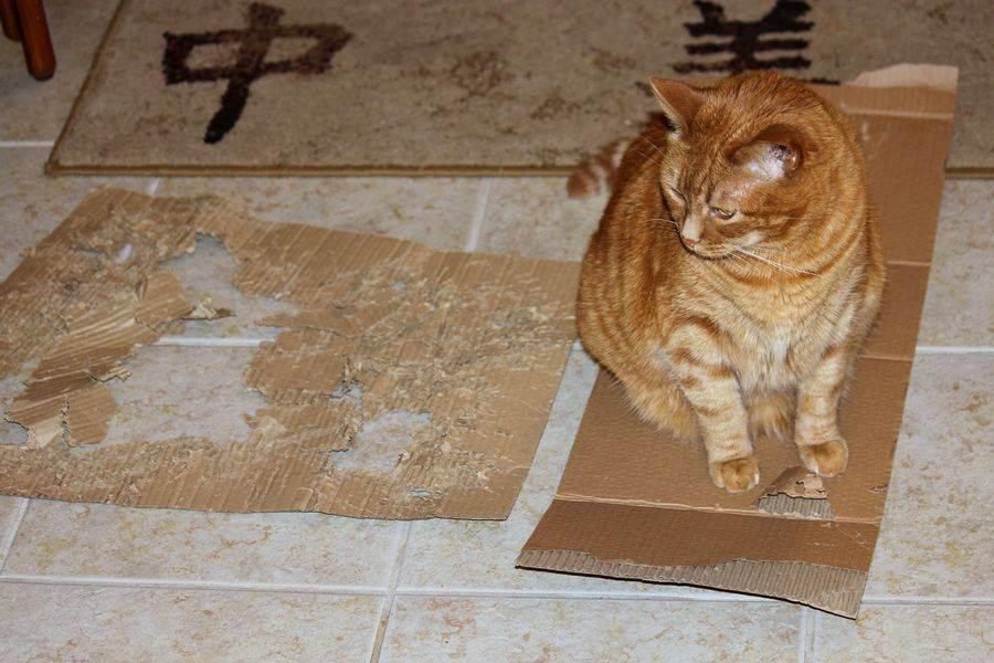10 способов сделать когтеточку для кошки своими руками