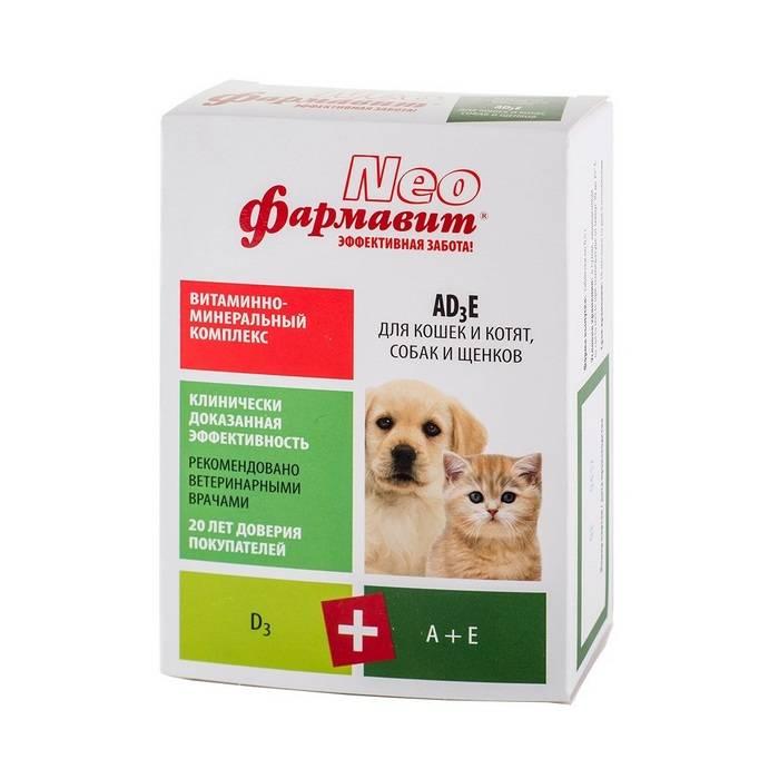 Витамины для кошки во время беременности