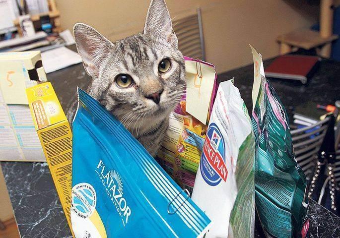 Виды и классы кормов для кошек