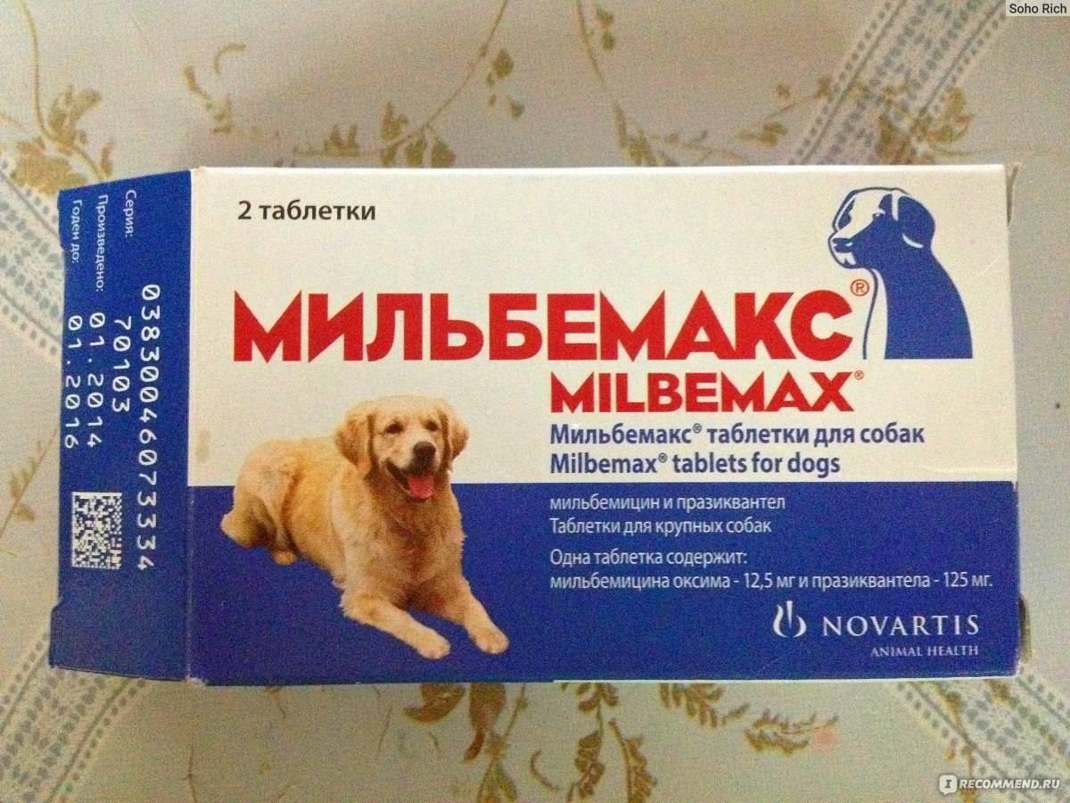 Инструкция по применению и стоимость препарата мильбемакс для котов