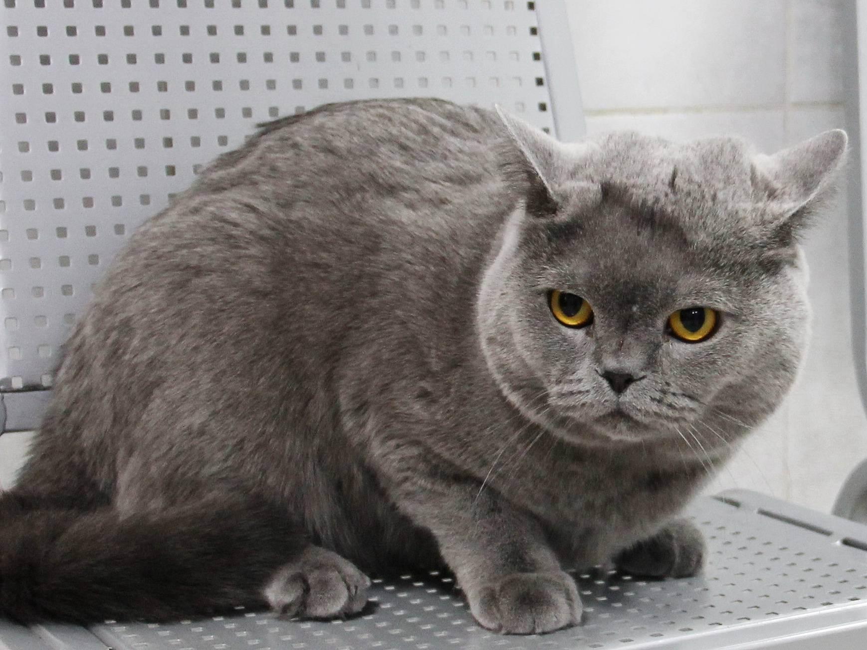 Гипертиреоз у старых кошек (причины, распространение, диагностика)