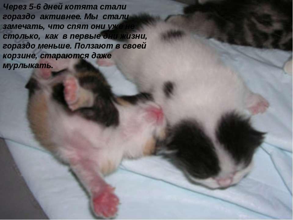 Этапы развития новорожденных котят