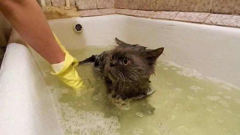 Температура воды для купания кошек: оптимальный температурный режим