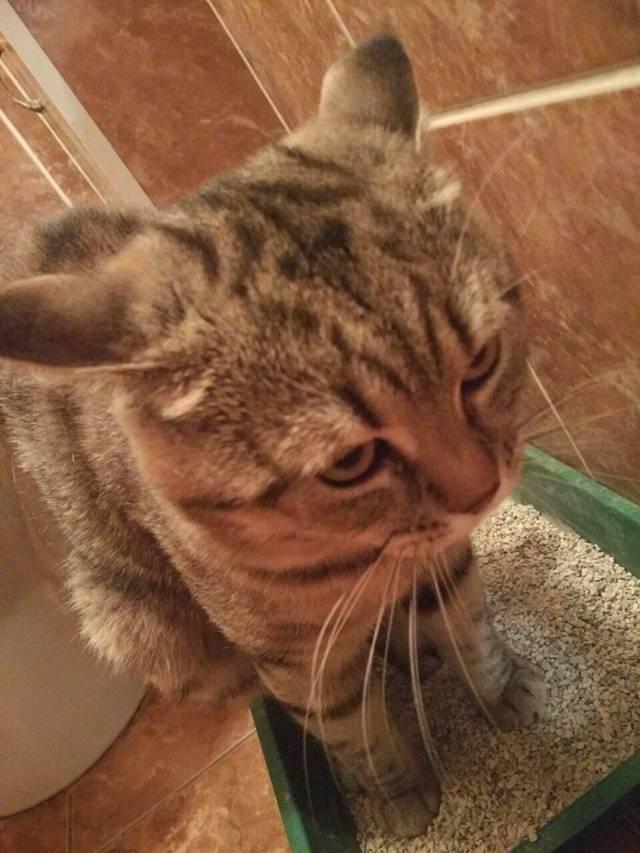 Что дать коту от поноса в домашних условиях