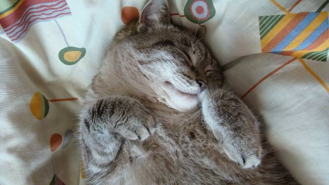 Почему храпит во сне кошка: тревожный или нормальный симптом?