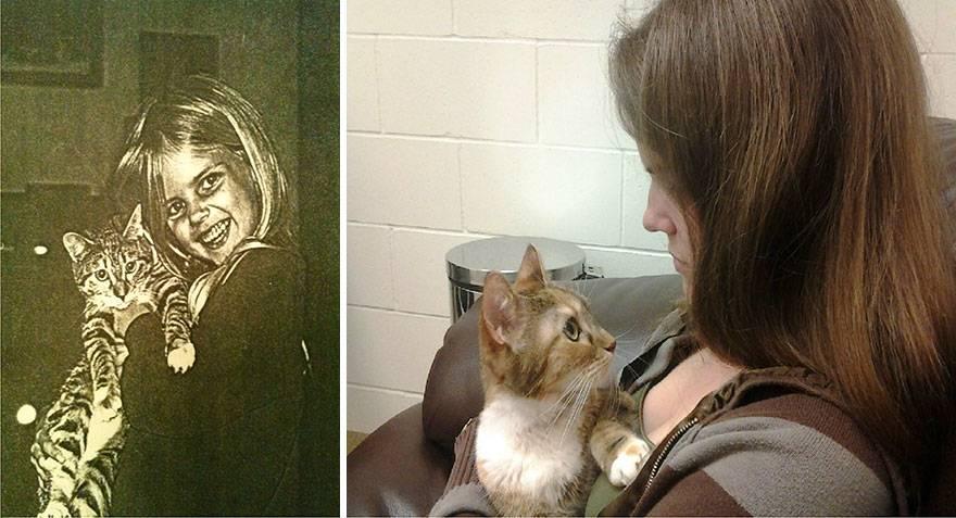 Умер котенок: причины смерти новорожденных и малышей постарше, как помочь животному