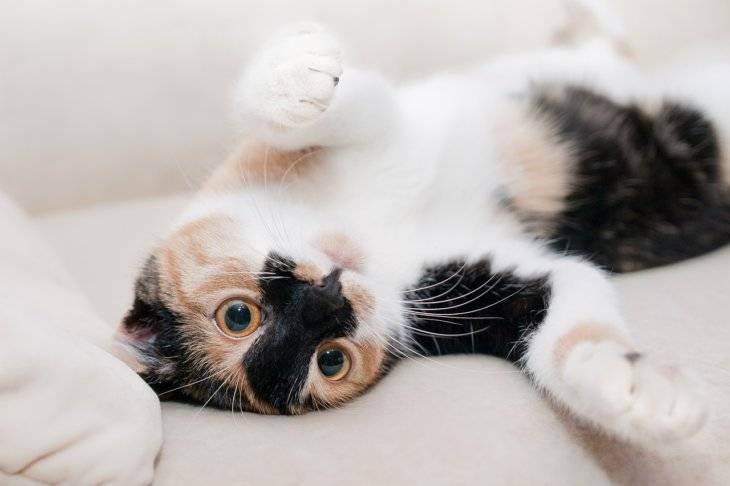 Кошка в доме, или как я победила аллергию