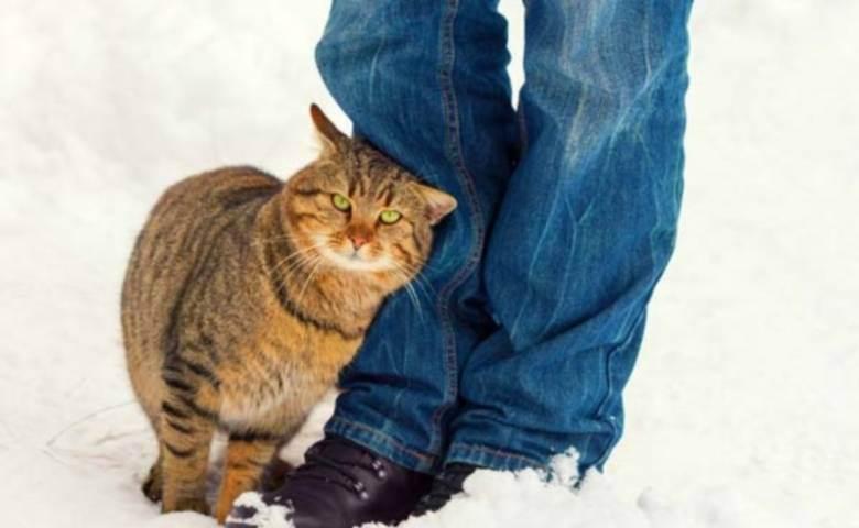 Как коты находят дорогу домой?