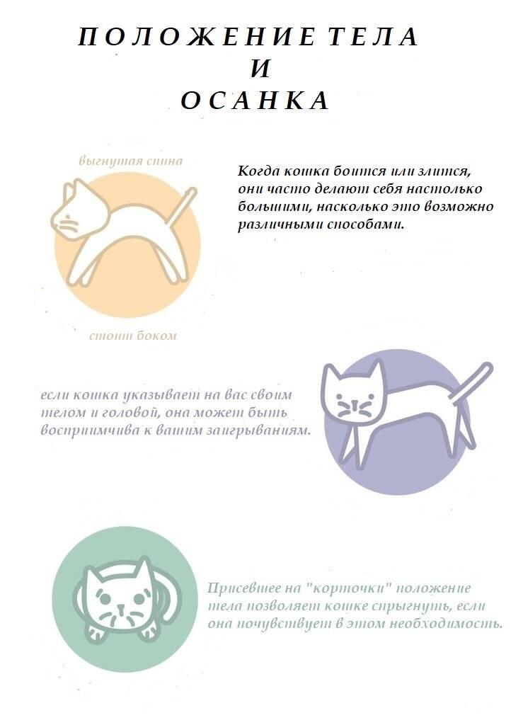 Поведение кошки перед родами и при родах - кошки и собаки простыми словами