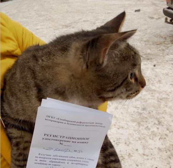 Первая прививка кошке от бешенства