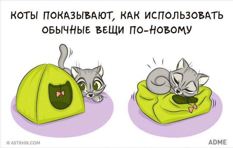 Стоит ли заводить кошку в квартире: плюсы питомца в доме, нужен ли коту уход, брать ли второе животное