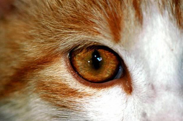 Болезни кошек: симптомы, лечение заболеваний. ценные знания для хозяев