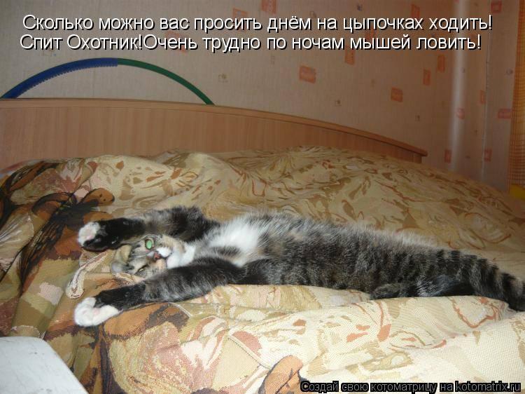 Не бойся, я с тобой: помощь пугливому котёнку