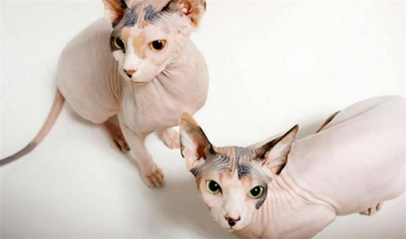34 интересных факта о котах и кошках
