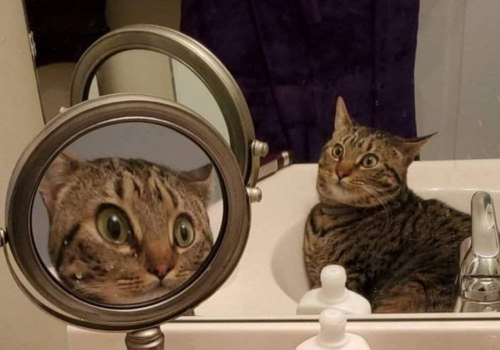 Видят ли кошки себя в зеркале и что еще они могут увидеть в отражении?