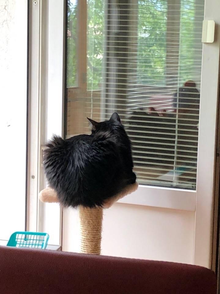Почему в доме не приживаются кошки