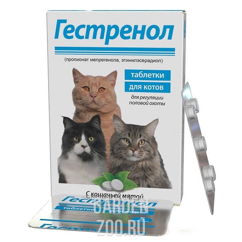 Особенности препарата «антисекс» для кошек и котов