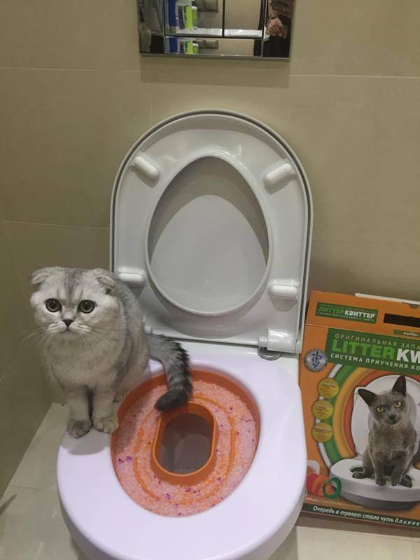 Можно ли и как приучить кошку к унитазу: поэтапная инструкция