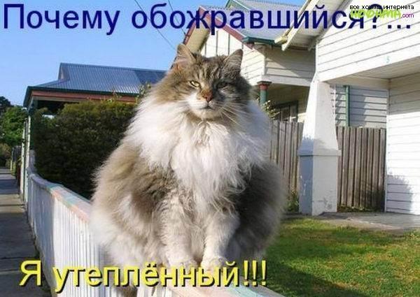 Основной закон кошачьего мира