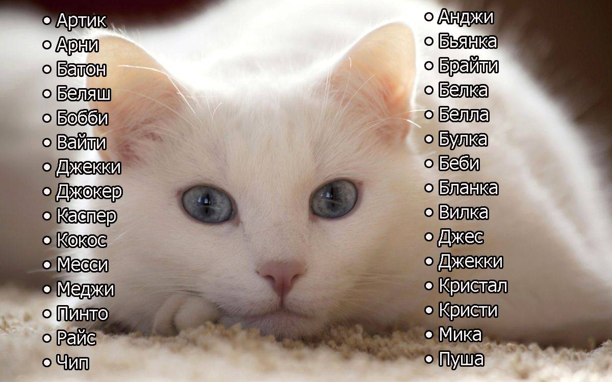 Японские клички | имена для кошек со значением