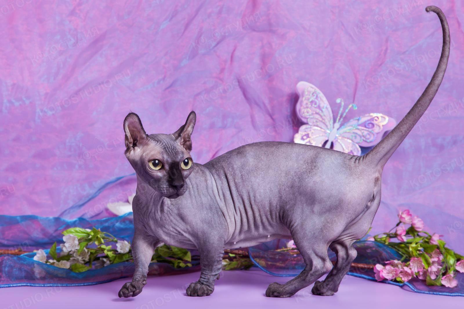 Эльф – кошка из сказки