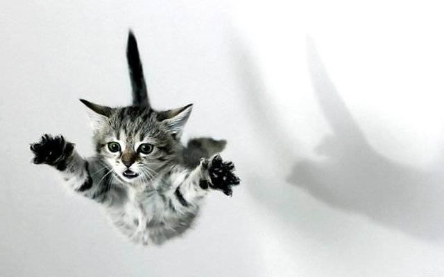 Что делать, если кошка упала с высоты?