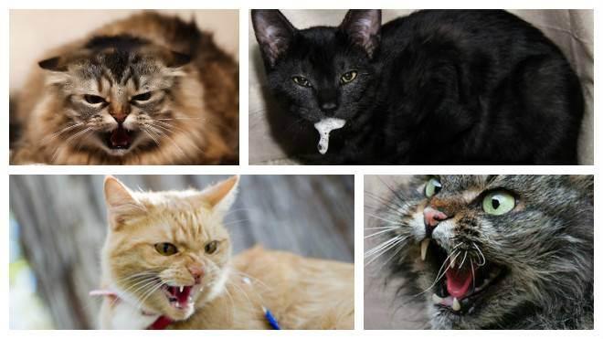 Бешенство у котов и кошек