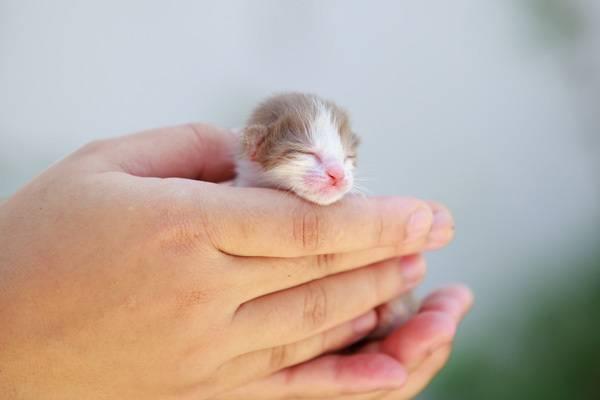 Что делать если новорожденный котенок не может присосаться к