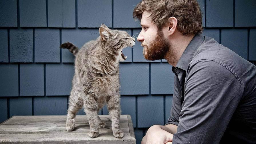 Атаксия у котов и кошек