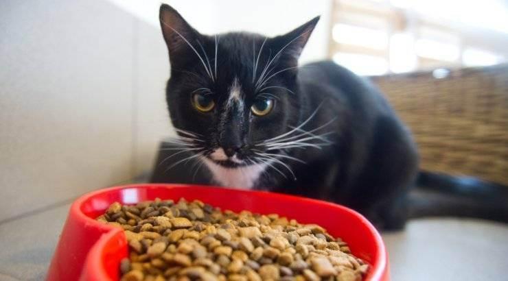 Чем кормить кошку для набора веса