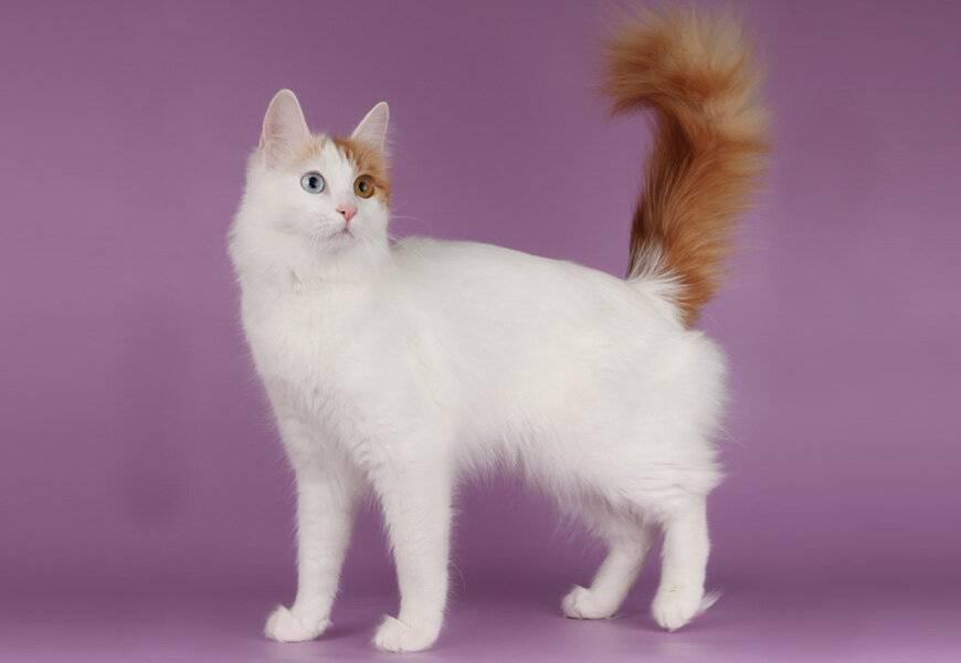 Топ самых красивых пород кошек