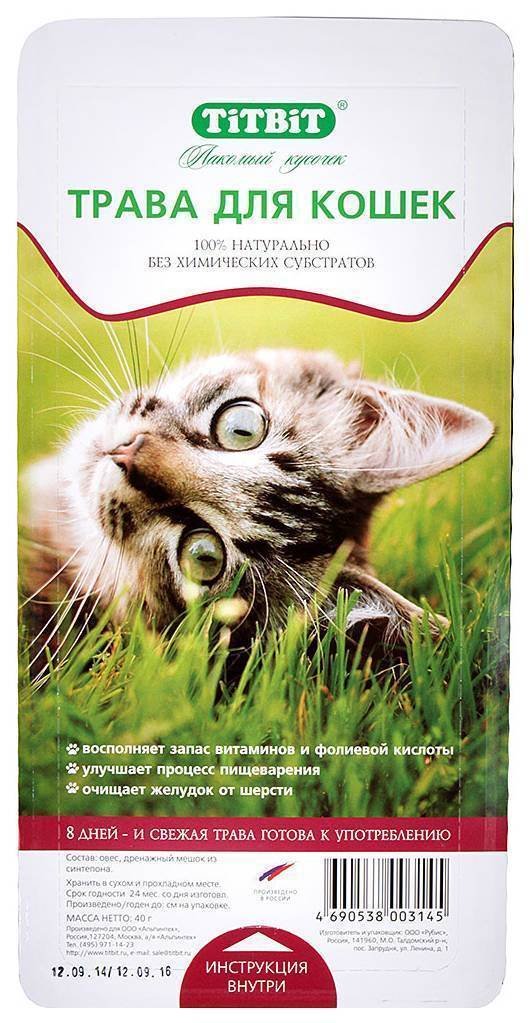 Нужны ли кошкам и котам витамины?