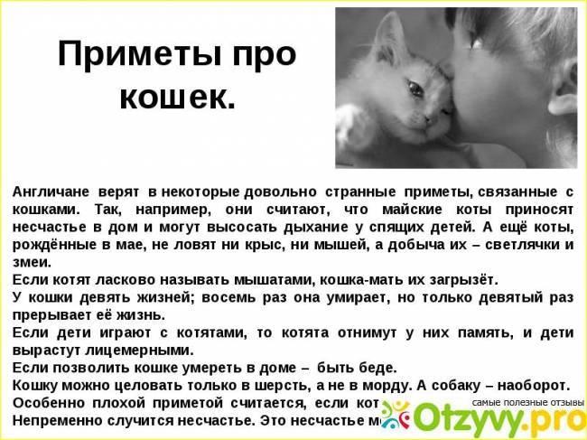 В постели с котом: почему питомцу нельзя спать с хозяином