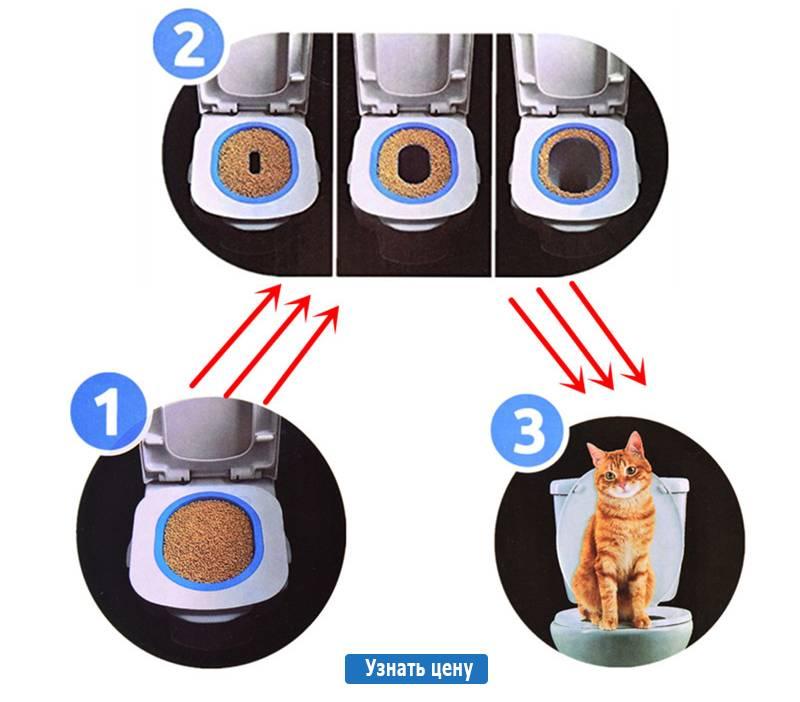 Специальные системы приучения кошек к унитазу, этапы и и полезные советы