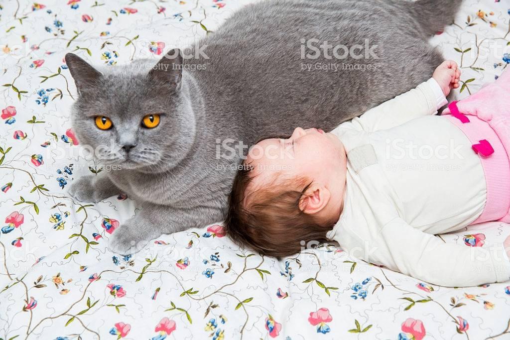 Кошка и новорожденный в доме
