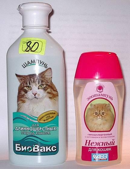 Шампунь для кошек: как выбрать и применять