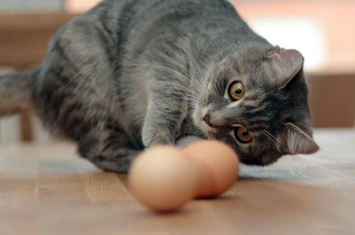 Кошка постоянно лижется: причины странного поведения кошка постоянно лижется: причины странного поведения