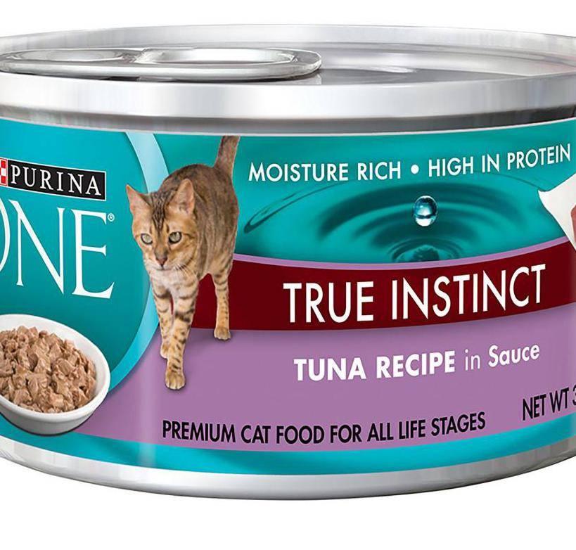 Корм в пакетиках для кошек: из чего делают и сколько кошачьего корма давать коту в день? как отучить кошек есть жидкий корм?