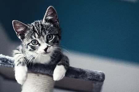 Как подготовится к приезду второго кота?