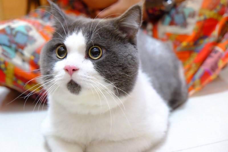 Можно ли кормить кошку сырым мясом