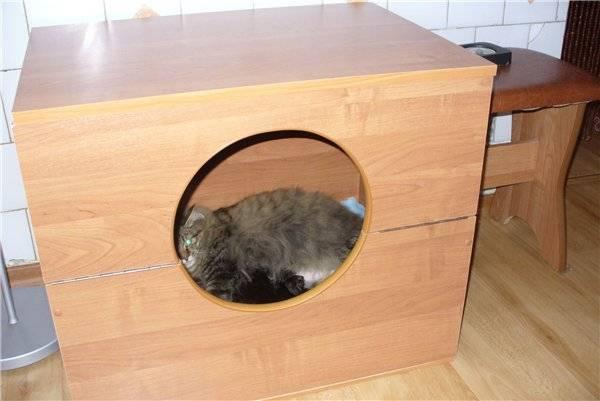 Как помочь кошке при родах: ускорение затянувшегося процесса в домашних условиях, стимуляция