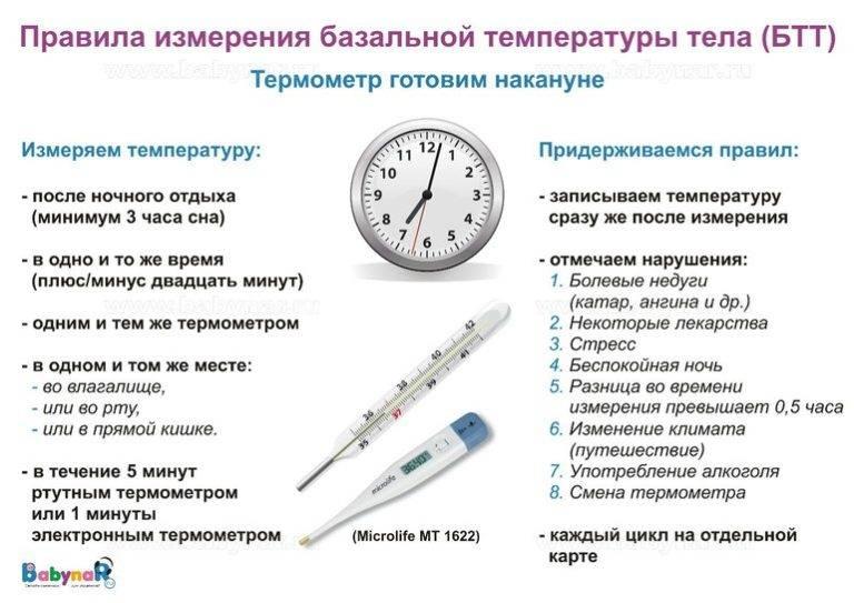 Измерение температуры кошкам: пошаговая инструкция по выполнению процедуры