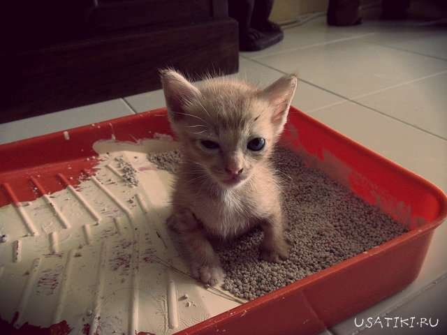 Запор у кошек и методы борьбы с ним в домашних условиях