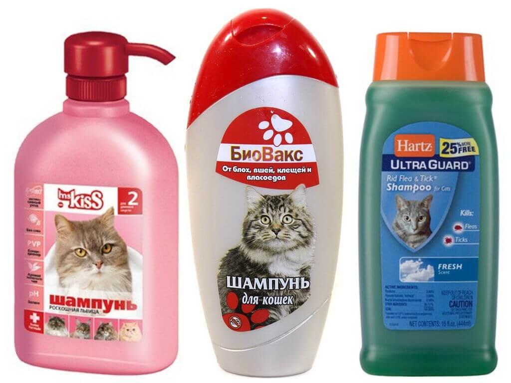 Какой шампунь от блох для кошек и котят лучший