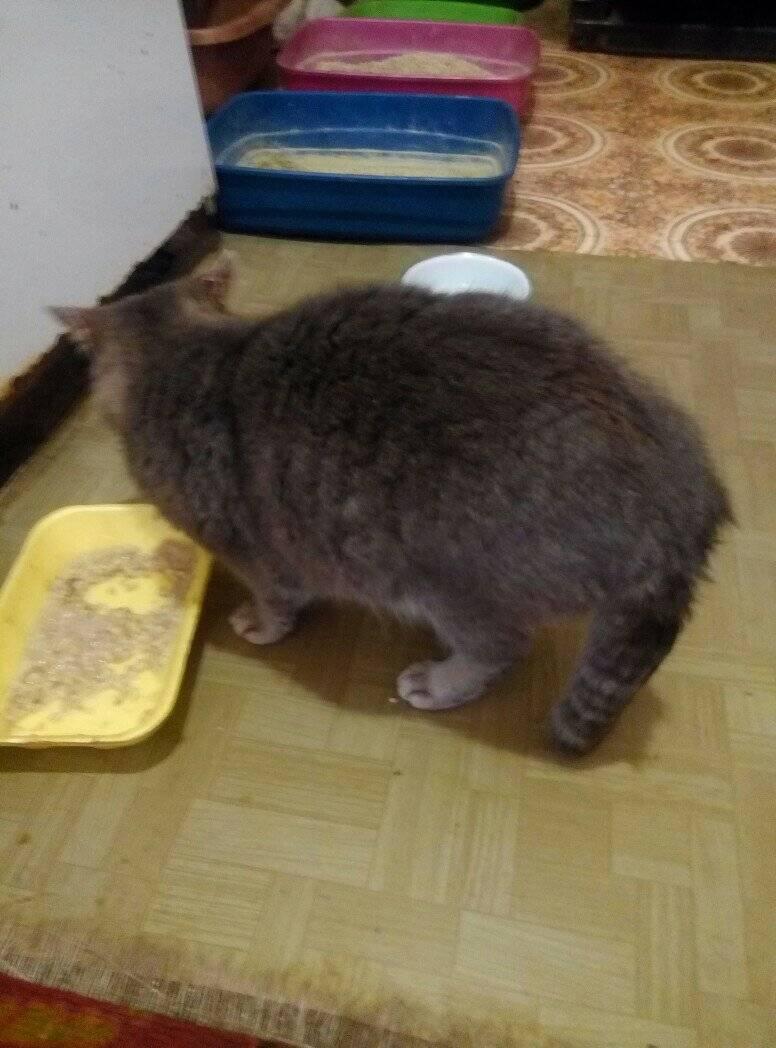 Жирный хвост у кота: причины, лечение жирный хвост у кота: причины, лечение