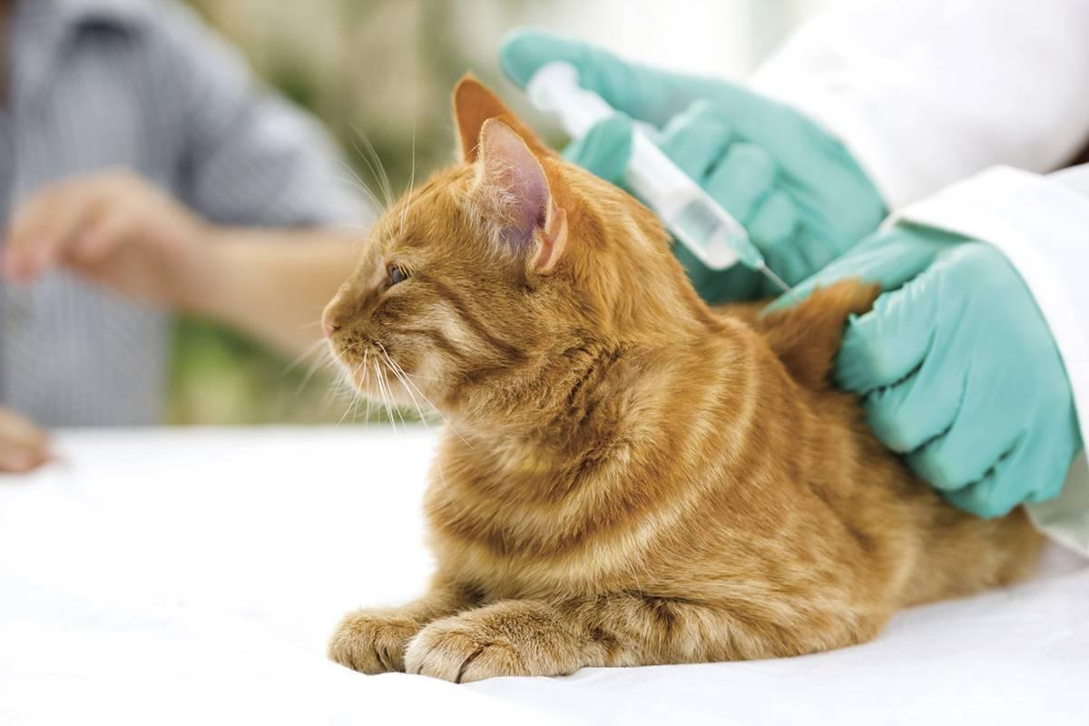Прививки кошкам от лишая цена
