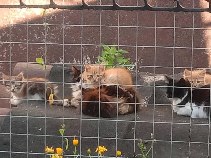 Куда можно отдать бездомную кошку