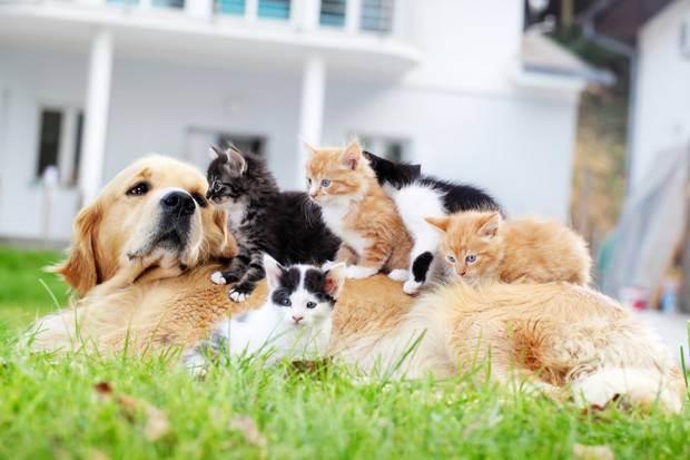 Породы собак которые хорошо ладят с кошками?