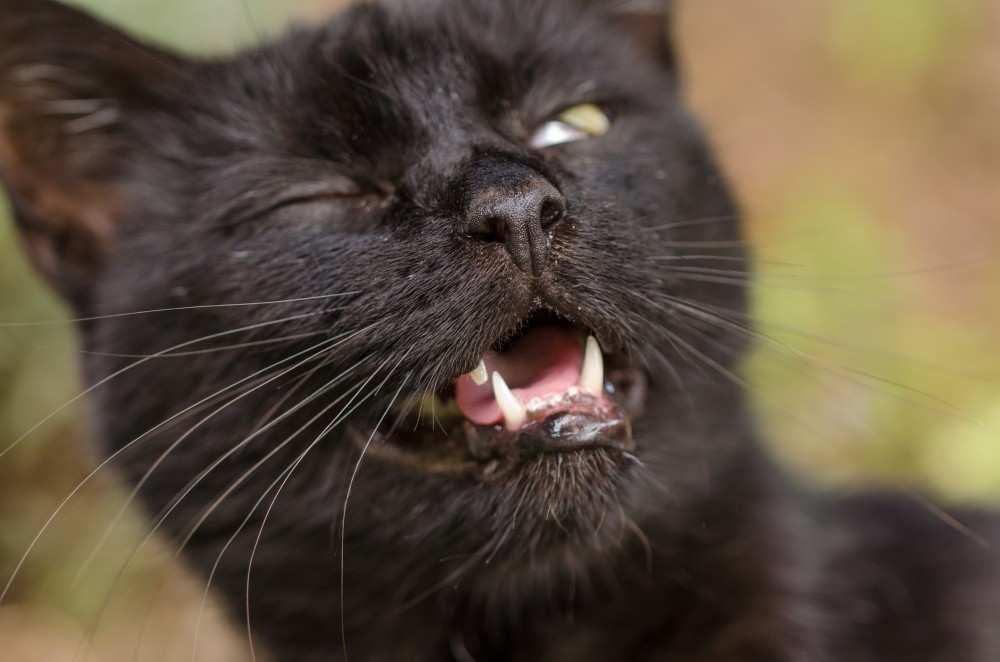 Почему кошка рычит кусается и шипит без причины